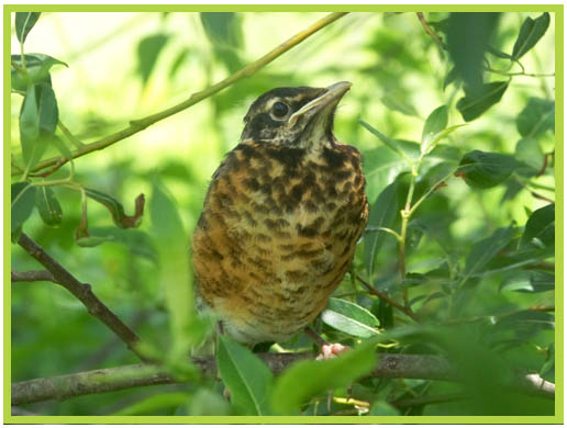 Verne Morton Memorial Photography Show & Contest