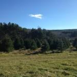 Dog Hollow Tree Farm