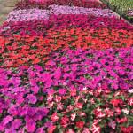 Neil Casey's Farm Market & Greenhouses