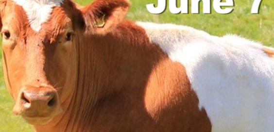 Cortland Dairy Day