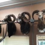 Windy Hill Taxidermy
