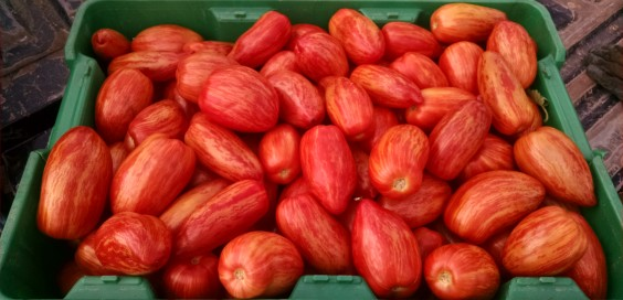 Ithaca Organics