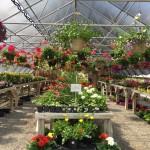 Valley View Gardens Nursery