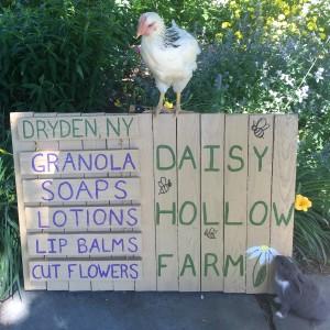 Daisy Hollow Farm