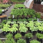Valley View Gardens Nursery