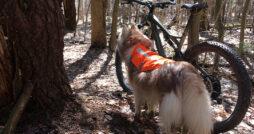 Biking with Your Dog