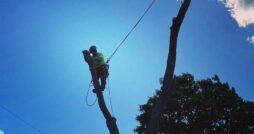 Cortland Tree Service
