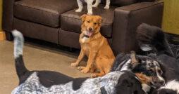 Top Dog Kennels
